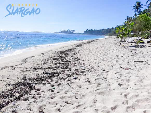 1,442 sqm Siargao Beach Front Lot For Sale