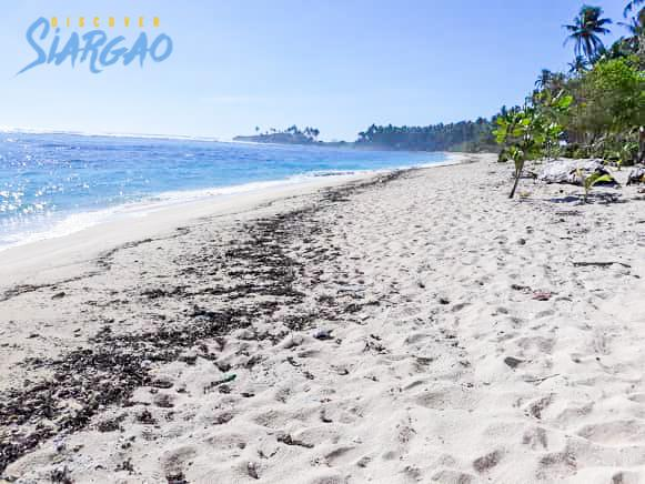 1,441 sqm Siargao Beach Front Lot For Sale