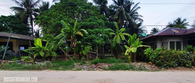 250 sqm Siargao Commercial Lot For Sale