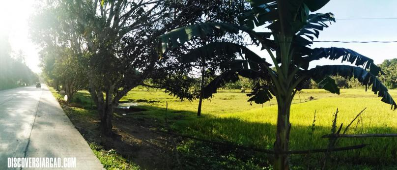 1,900 sqm Siargao Lot For Sale