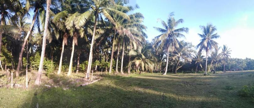 500sqm Siargao Lot For Sale Near the Beach