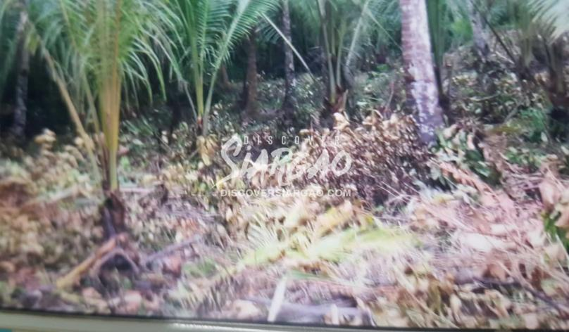 2.2 Hectare Beach Front For Sale in Burgos Siargao