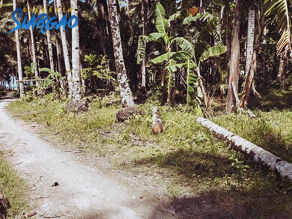 109 sqm Lot For Sale in Sta. Monica Siargao Island