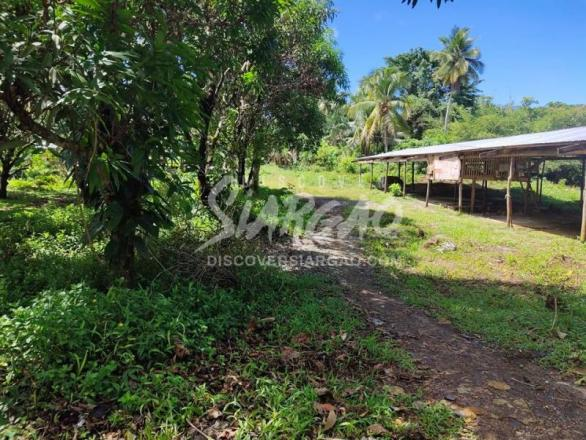 1.8 hectare or 18,993 sqm roadside lot or along the highway in Osmena Dapa Siargao For Sale
