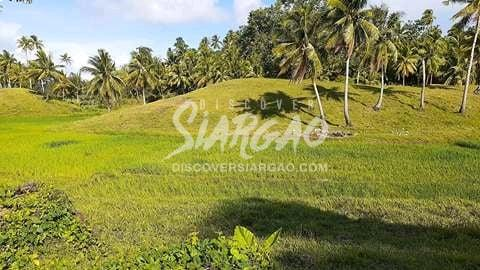 3,956 sqm Lot For Sale in Libertad General Luna. Roadside property