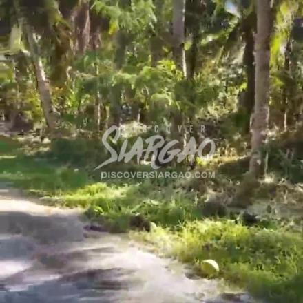 1 Hectare Roadside Lot For Sale in Tigasao San Isdro Siargao Island