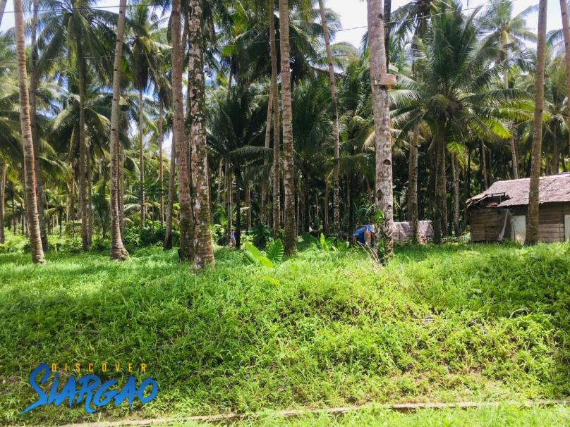 7,000 Square meters Roadside Lot in Bay Bay Burgos , Siargao Island