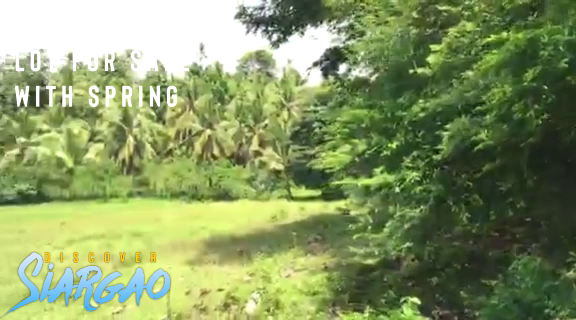 1 Hectare Lot For Sale with Natural Spring in Sta. Cruz General Luna Siargao