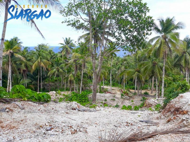 14,986 sqm Overlooking Pacific Ocean view Lot in Burgos Siargao Island