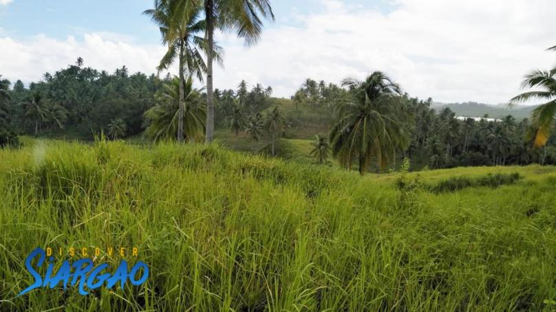 2.9 Hectare Land For Sale in Cabitoonan, General Luna Siargao Island