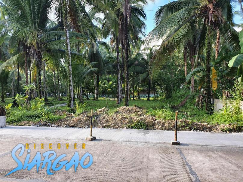 500 sqm roadside  Lot in Purok 1 General Luna Siargao