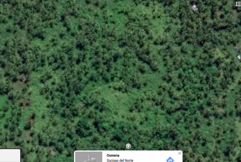 25 hectares Lot in  Osmena Dapa Siargao Island For Sale
