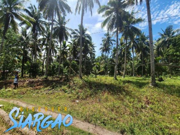 700 sqm Lot For Sale in Sta. Fe General luna Siargao