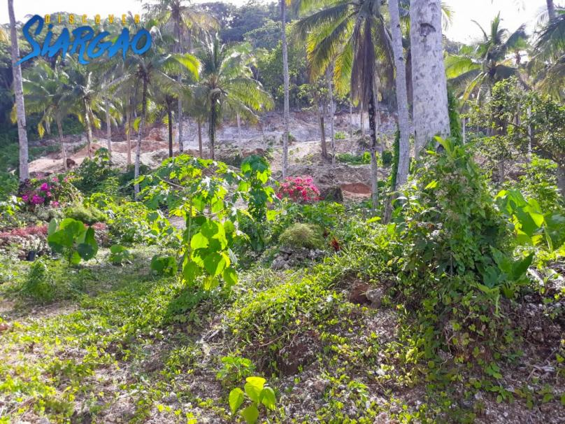 1,404 sqm Overlooking Pacific Ocean view Lot in Burgos Siargao Island