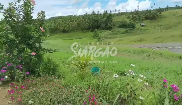 6 Hectare Overlooking Lot in Magsaysay General Luna Siargao Island beside Catangnan River Mangrove