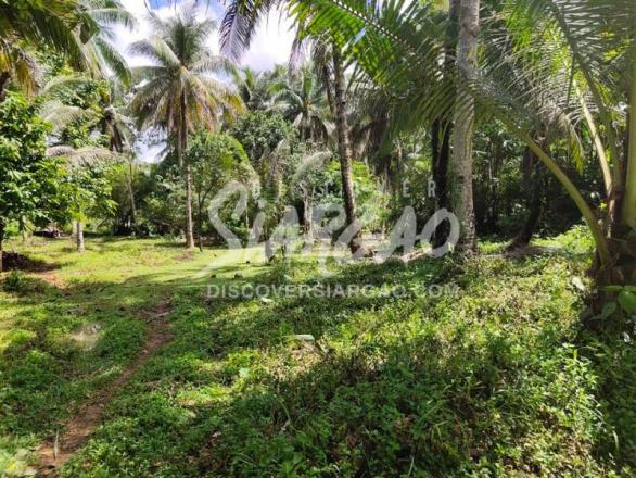 1,990 sqm roadside lot or along the highway in Osmena Dapa Siargao For Sale