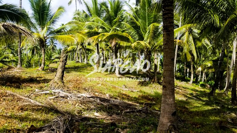 3,400 sqm Overlooking Lot in Burgos Siargao Island