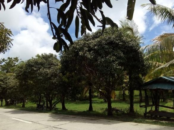1,305 sqm Roadside Lot For Sale in General Luna Siargao Island