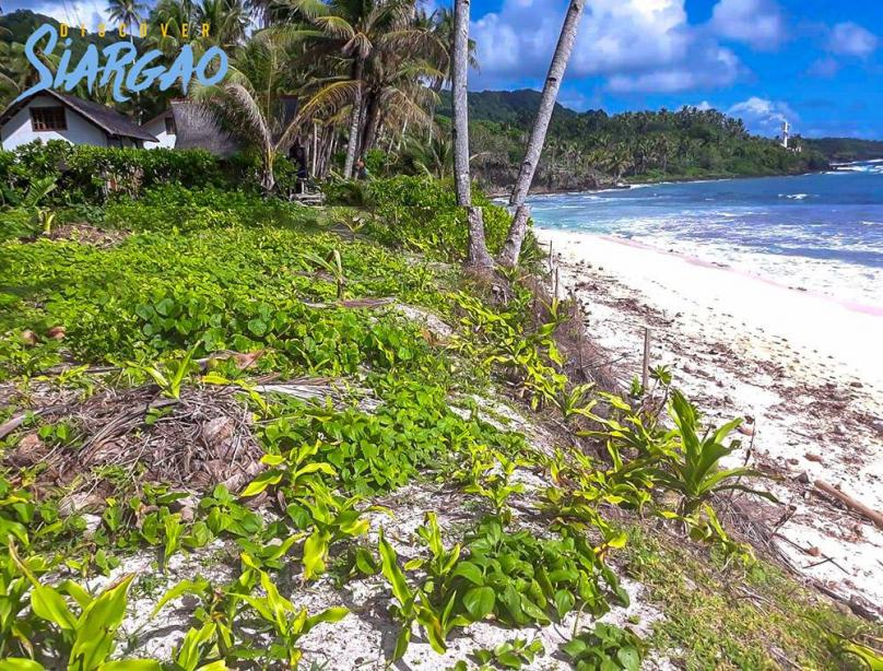1,184sqm Pacifico  Beach Front in Siargao For Sale
