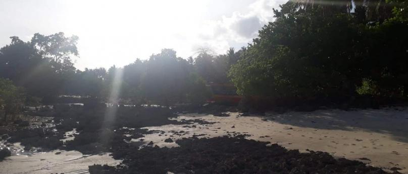 3.5hec Siargao Beach Front and Coco Land Property For Sale