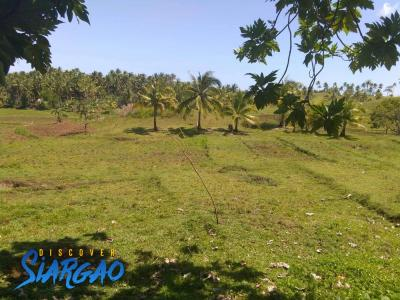 1.5 Hectare Lot For Sale in Magsaysay General Luna Siargao Island
