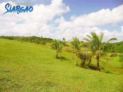 7,800 sqm Overlooking Riverside  Lot For Sale in Tawin-Tawin GL Siargao Island