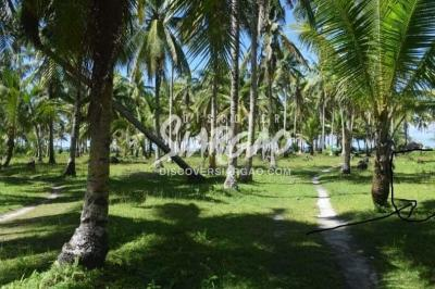 409 sqm Lot For Sale in Libertad General Luna Siargao