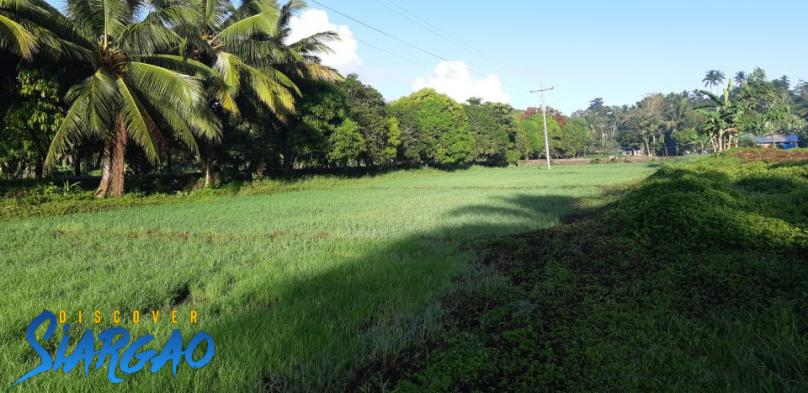 1,000 sqm the highway in Tawin-tawin General Luna Siargao