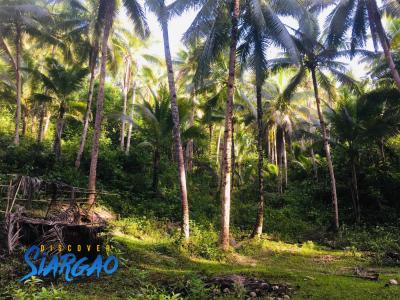 1.6 Hectare Lot For Sale in Abad Santos, Sta. Monica  Siargao Island