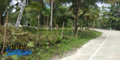 2,510 sqm Lot For Sale near Cloud 9 Siargao