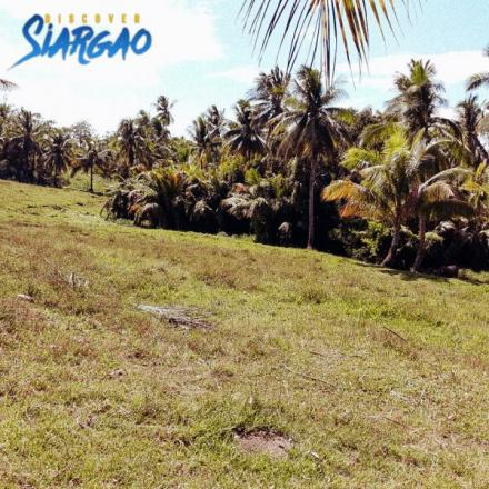 24,951 sqm or 2.4 hec Lot For Sale in Tawin-Tawin General Luna Siargao