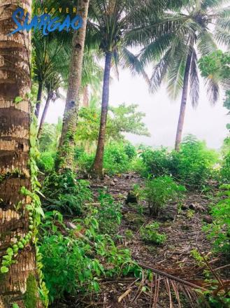 3.6 Hectare Beach Front and Coco Land Property Lot For Sale in Sta. Cruz General Luna Siargao