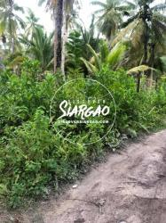 1,000 sqm Vacant Lot For Sale near Beach in Sta. Fe General Luna Siargao Island
