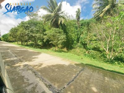 596 sqm Roadside Lot in Binayuto Tawin-Tawin GL Siargao