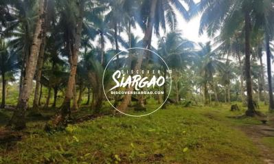 1.7 hectare Vacant Lot For Sale in Malinao General Luna Siargao