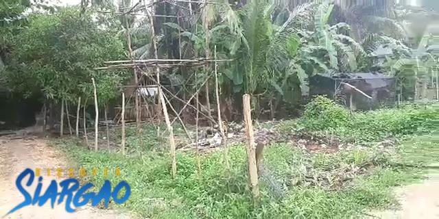 200 sqm Lot For Sale in Purok 5 General Luna siargao Island