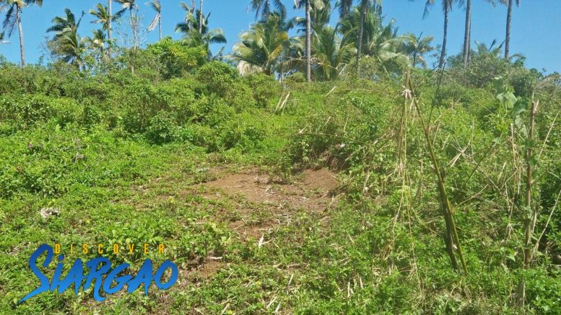 1.9 Hectare Riverside Property For Sale in San Isidro Siargao Island