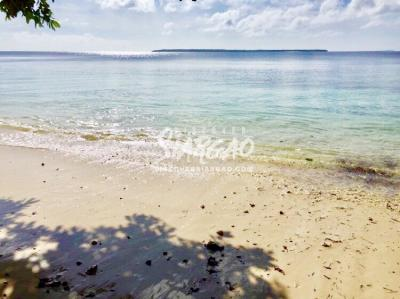 9,000 sqm Beach Front For Sale in Malinao General Luna