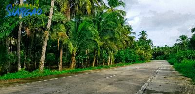 1.5 Hectare Road Side Lot For Sale in Tigasao San Isidro Siargao Island