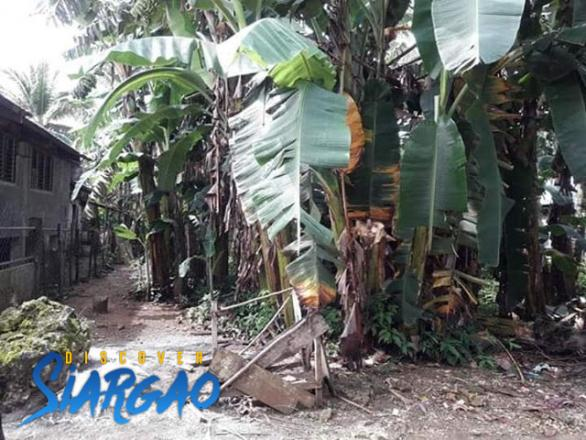 396 sqm Lot For Sale in Del Carmen Siargao Island