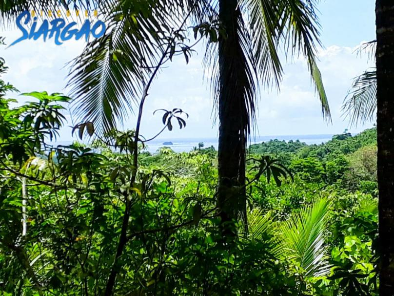 1 hectare Overlooking Ocean View in Union Siargao For Sale