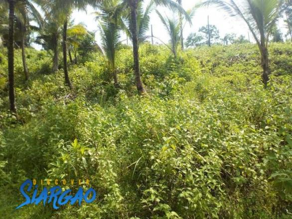 2,801 sqm Roadside Property Lot For Sale in Malinao General Luna Siargao