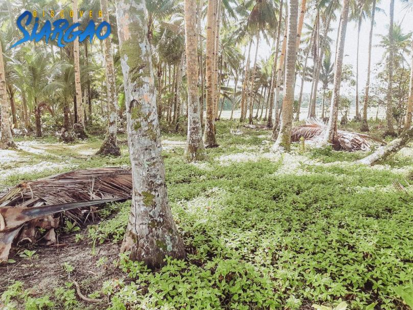 2,454 sqm Beach Front Property in Sta. Fe GL Siargao For Sale