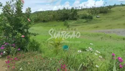 1,000 Overlooking Lot in Magsaysay General Luna Siargao Island beside Catangnan River Mangrove