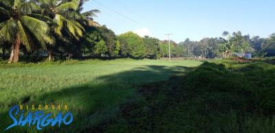 2.5 Hectare Property Land For Sale in Tawin-Tawin General Luna Siargao Island