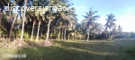 Residential Lot For Sale in Siargao Near the Beach
